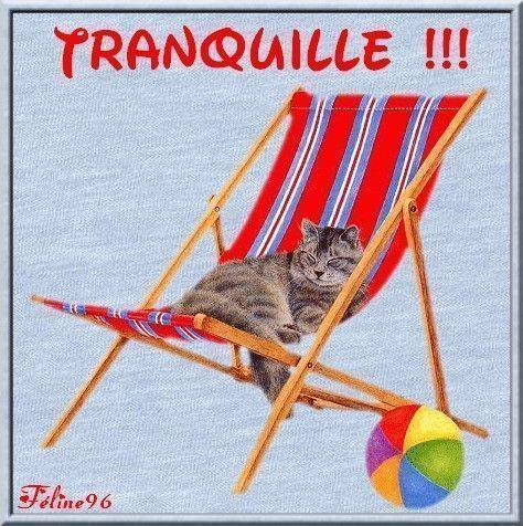 http://feline96.f.e.pic.centerblog.net/d90c9563.jpg
